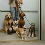 Saiba o que é permitido para criar animais em condomínios