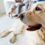 Condomínios estabelecem regras para animais de estimação