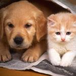 Proibição de animais em condomínio