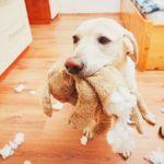 Animais em condomínio: o que pode e oque não pode