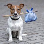 Parecer sobre a manutenção de animais em condomínios aspectos legais e práticos